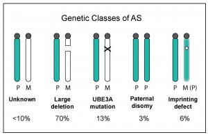 genetic classes of as